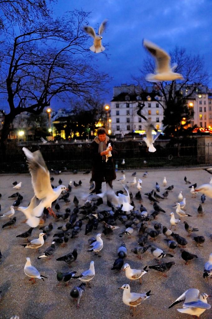 6 Dame aux oiseaux